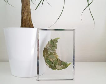 Moon shaped box Herbarium - pressed leaves