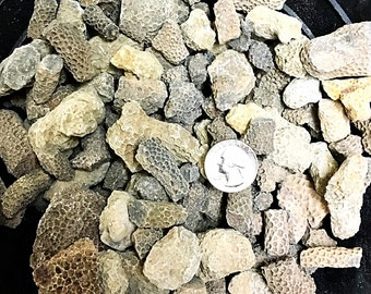 1 Pound of Fossilized Coral - Bulk Fossils, Branch Coral - Great for Jewelry/Crafts!