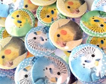 Pet Parakeets Birds 1-inch buttons   Blue + Green Budgie   Cockatiel