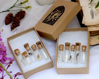 The TEENSY TINY Oddity Vial Set | Set of 5 | Real Taxidermy, Animal Bones, Insects, Fossils and More | Vulture Culture Goblincore Specimen