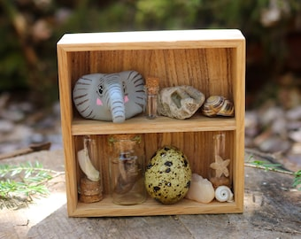 Mystery Mini Curiosity Cabinet | Curated Curio Set Real Taxidermy Oddities | Handmade Square Shelf Display | Witchy Altar Bones Specimens