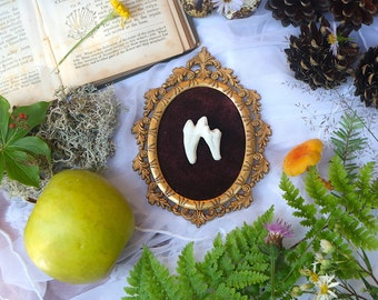 Framed Wolf Tooth | Real Taxidermy Art in a Vintage Frame | Gothic and Witch Home Decor | Victorian Halloween Oddities and Curiosities