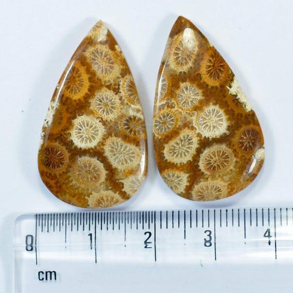 Belle Designer naturel corail fossile Designer pierres pierres pierres précieuses assorties paire 31 x 18 x 5 mm Briolette 38 Cts pierres précieuses - fabrication de bijoux en vrac 783e5a