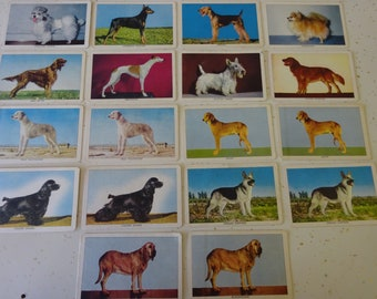 Vintage Challenge of the Yukon Dog Cards 18 Total 5 Duplicates Quaker Oats