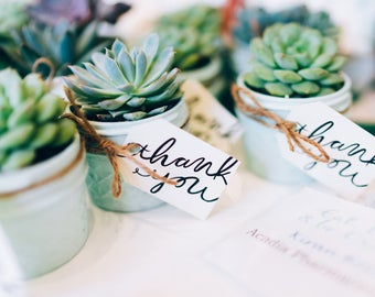 Succulent Favors and Corporate Gifts
