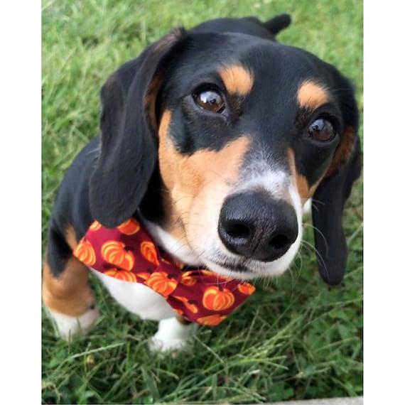 Esprit libre chiots chien noeud papillon! TAILLE moyenne - avec noeud «Récolte d'automne»