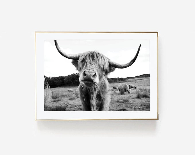 Featured listing image: Highland Cow Black and White Photography Print