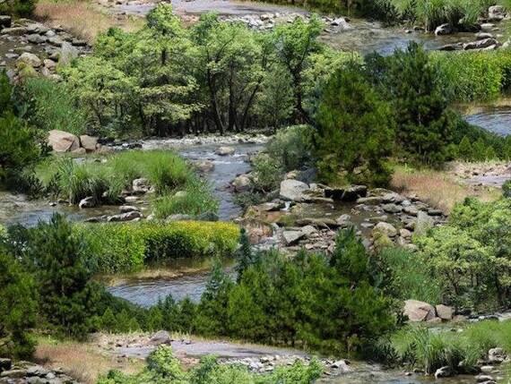 Elizabeth's Studio Landscape Medley Green Creeks River 100% Cotton Fabric by the yard (ES193)