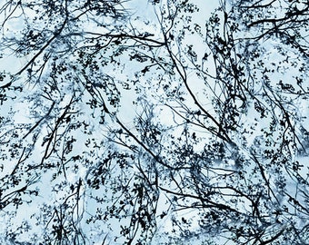 Branches Fabric: Timeless Treasures Cloud Nature Tree Branches -C6407 Cloud Nature Walk 100% cotton fabric by the yard (TT882)
