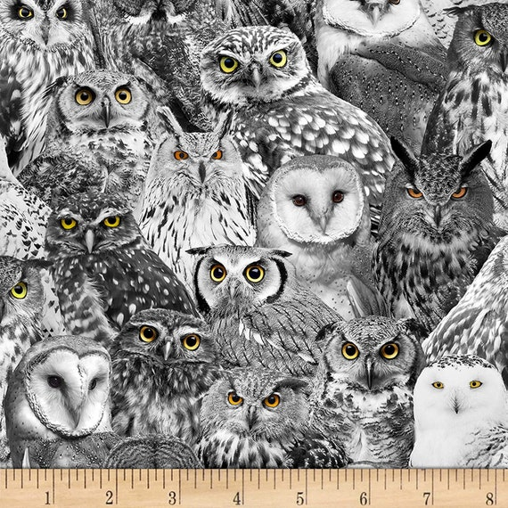 Owls Fabric, Animals Fabric:   Timeless Treasures Wicked Fog Packed Owls  100% cotton Fabric by the yard (TT1139KK)
