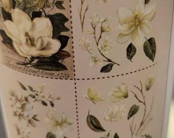 Belles and whistled Tranfer Magnolia Garden - Decor Transfer- ephemera