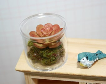 Miniature dollhouse terrarium : Dark Pink