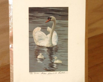 Swan Limited Edition Print