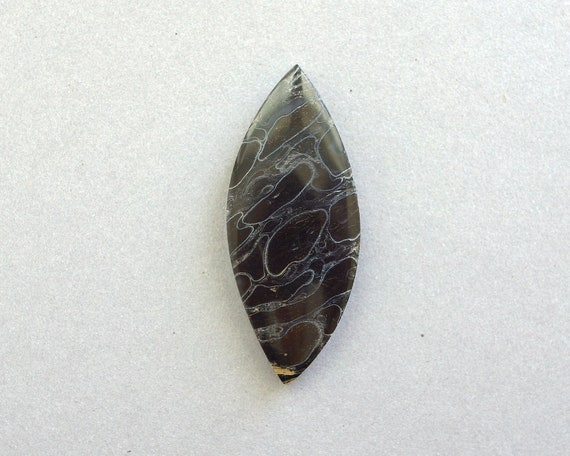 Petrified Palm Root Cabochon