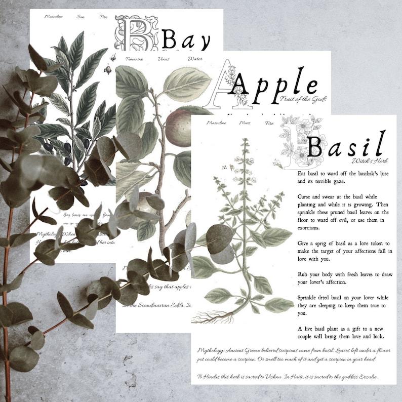 DIGITAL DOWNLOAD  Magical Herbalism Book of Shadows Kitchen image 0