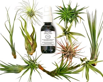 12 pcs Tillandsia Air Plant Lot in Gift BOX! / Kit includes 11 Plants and 1 bottle of Organic Air Plant Fertilizer Food. Indoor Plants