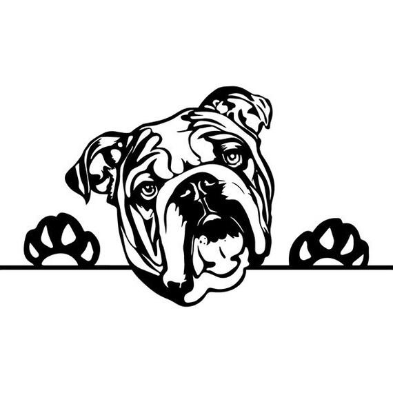 engels bulldog 9 gluren paws amerikaanse mascotte hoofd etsy