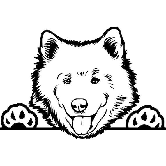 Samoyed 3 Peeking Dog Smiling Happy Breed Puppy K 9 Pedigree Etsy
