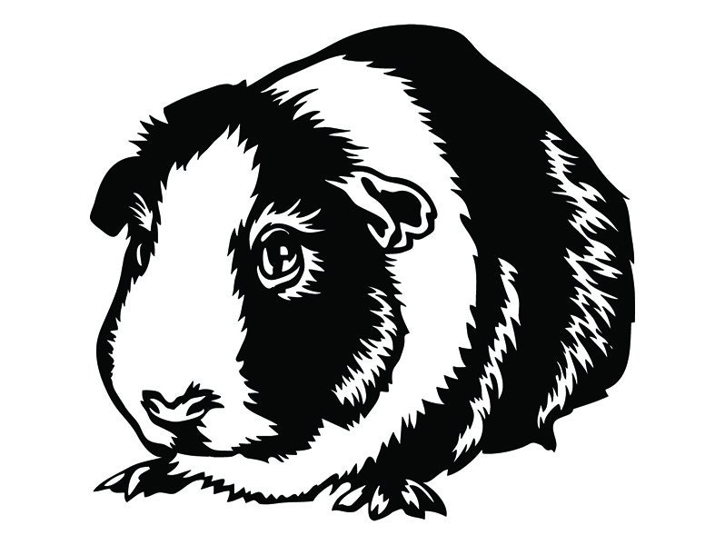 Guinea Pig 6 Pet Rodent Design Cute Fluffy Cage Domestic