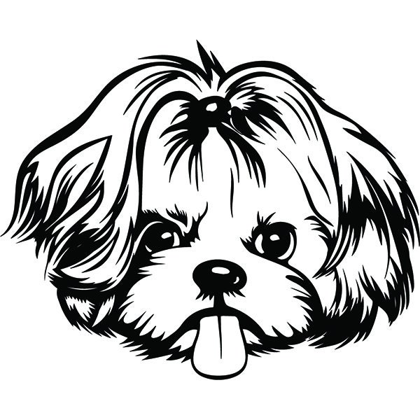Shih Tzu 19 Happy Dog Breed K 9 Toy Group Lap Animal Pet