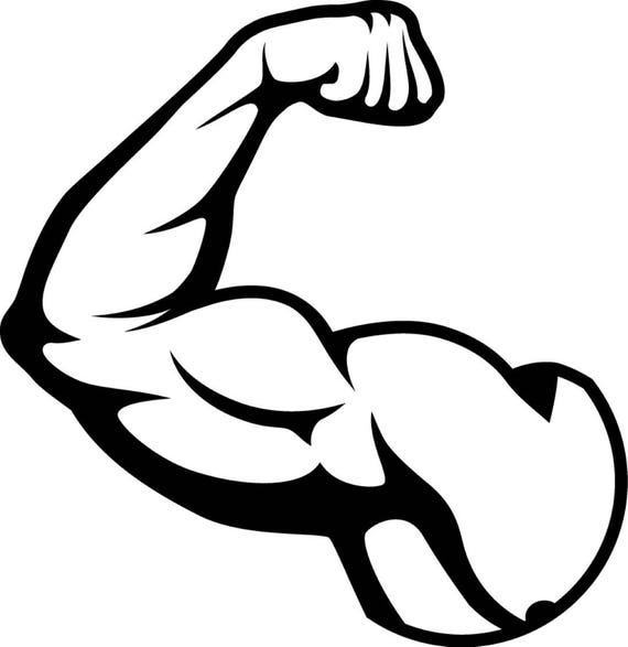 Bicep Muscles Fit Weightlifting Bodybuilding Fitness Workout Etsy