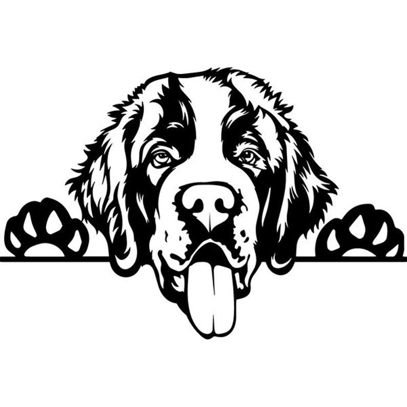 Petco Dog Leash