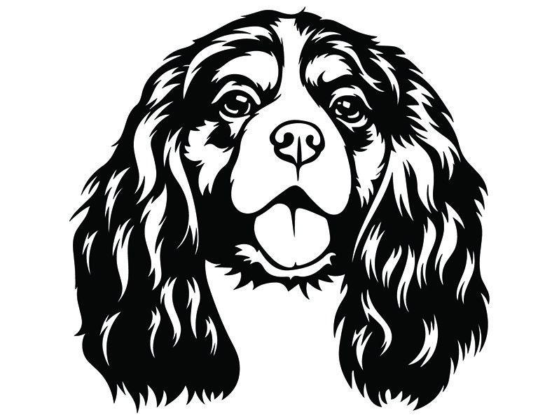 custom cavalier wiring diagram database Stanced Cavalier cavalier king charles 2 smiling dog breed animal pet pedigree etsy z24 custom 50