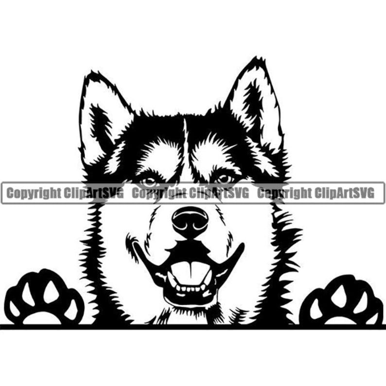 Siberian Husky 51 Peeking Smiling Dog Sled Snow Breed K-9 image 0
