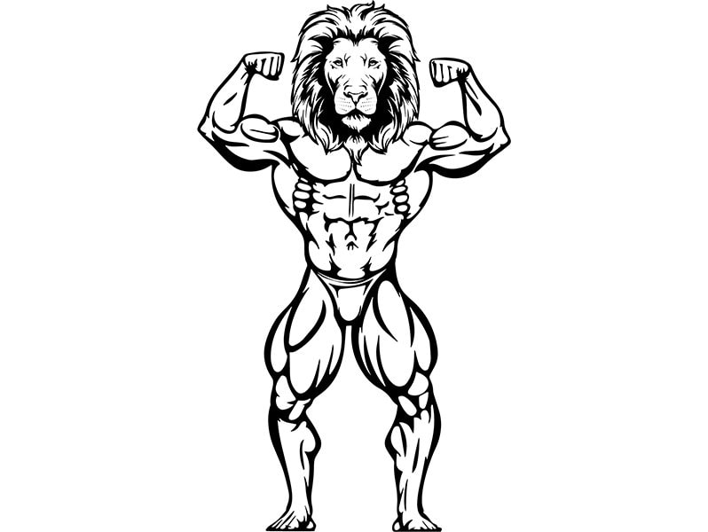 Bodybuilding Lion 1 Bodybuilder Muscle Weightlifting Fitness