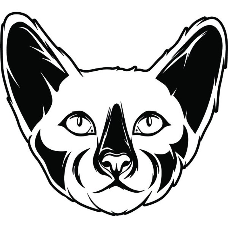 Siamese 2 Cat Breed Beautiful Kitten Kitty Feline Pedigree