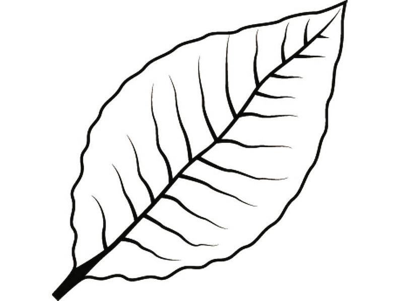 Tobacco Leaf 2 Smoker Cigar Smoking Smoke Burning Smoke Blunt