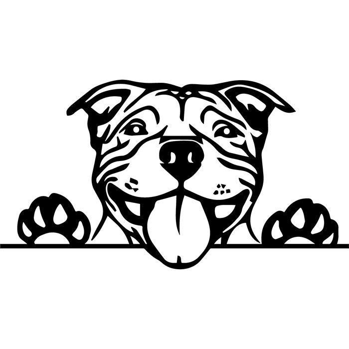 American Pit Bull 7 Puppy Peeking Paws Pet Terrier Dog Breed