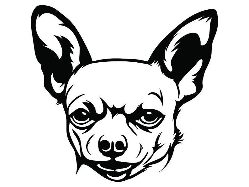 Chihuahua 2 Cane Adorabile Cucciolo Razza K 9 Animale Etsy