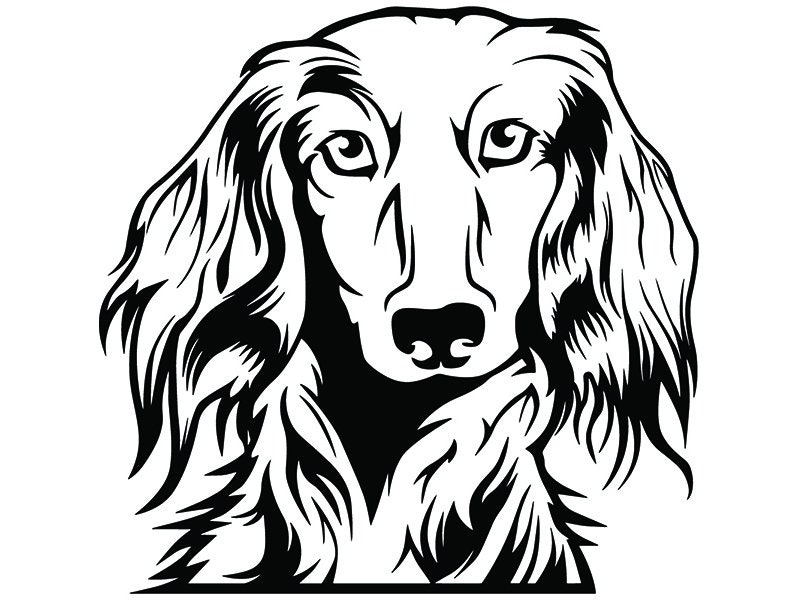 Dachshund 33 Dog Breed Wire Smooth Long Haired K 9 Animal Pet
