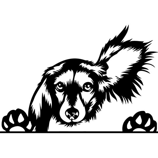 Dachshund 64 Peeking Dog Breed Wire Smooth Long Haired Animal