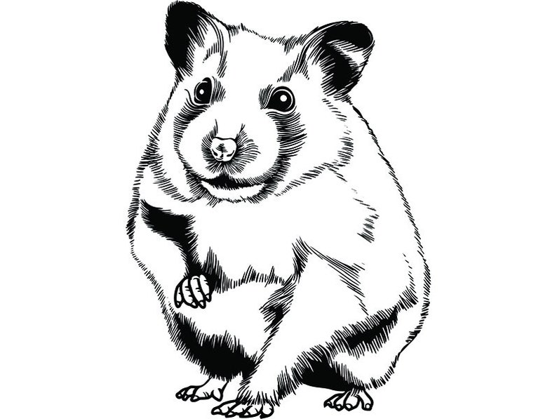 Hamster 1 Pet Rodent Design Cute Fluffy Cage Domestic Mammal
