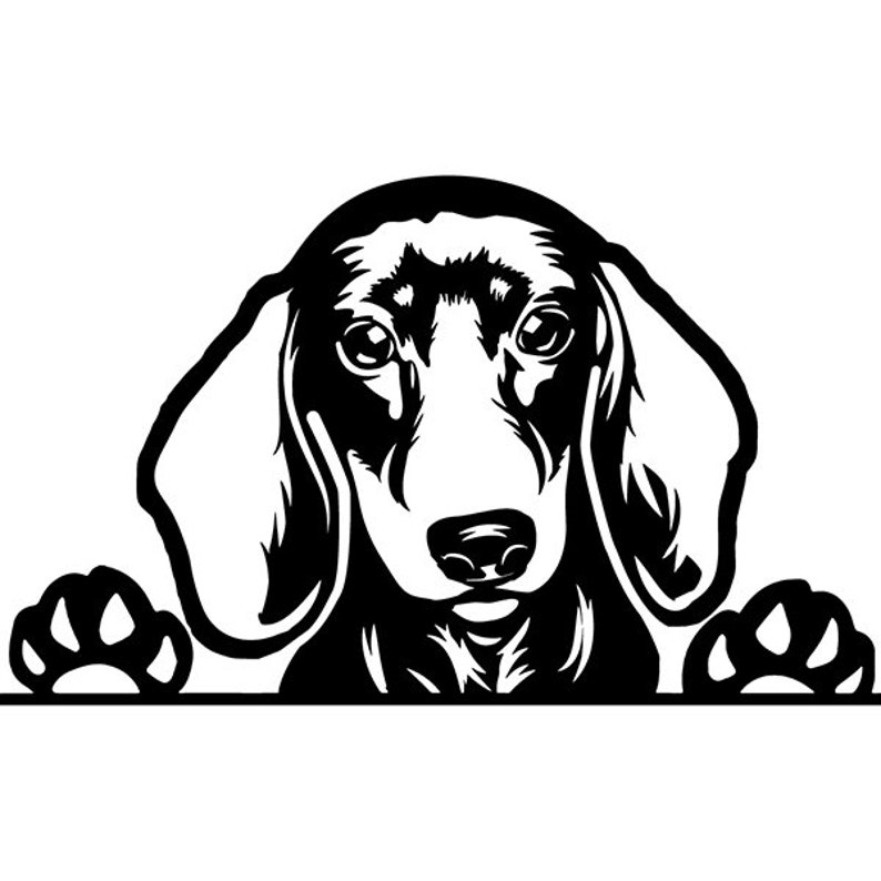 Dachshund 32 Dog Breed Wire Smooth Long Haired K 9 Animal Pet