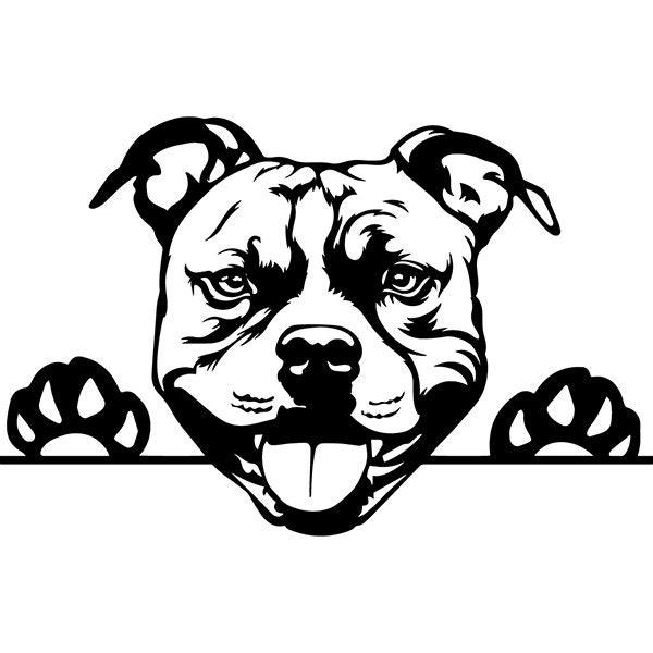 American Pit Bull 31 Peeking Dog Paw Puppy Pet Terrier Breed