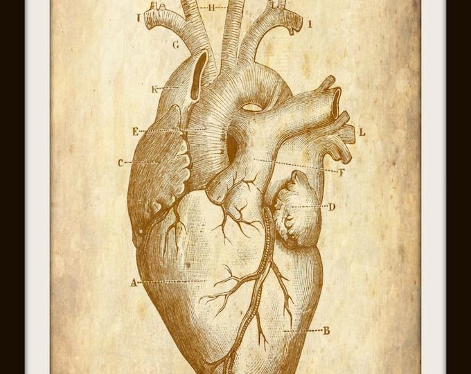 Vintage Human Heart, Art, Anatomy, Instant Download, Halloween Decor, Medical, Printable Wall Art, JPEG