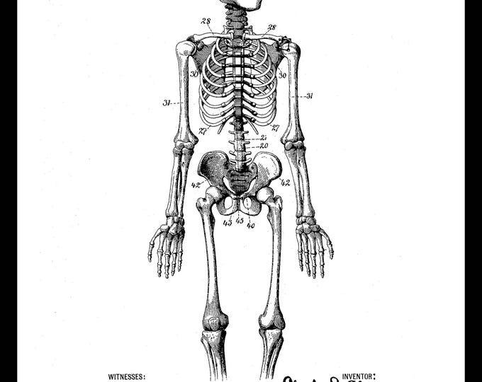 Instant Download, Human Anatomy, Skeleton, Vintage Illustration, Nurse Practitioner, Doctor Office Decor, Medical Wall Art, Patent Print
