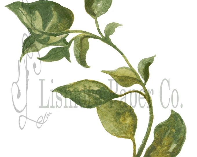 Instant Download Botanical, Basil Herb, Printable Art, Instant Wall Art, Graphic Kitchen Art, Craft, Digital Download, Botanical Wall Art