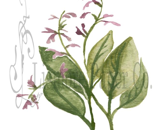 Instant Download, Botanical, Sage, Herb, Printable Art, Instant Wall Art, Graphic, Kitchen Art, Craft, Digital Download, Botanical Wall Art