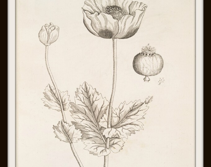 Instant Download printable Art,Poppy,Botanical Print Set,Digital Print Set,Graphic Print,Wall Art Print,Vintage, Printable,Black&White