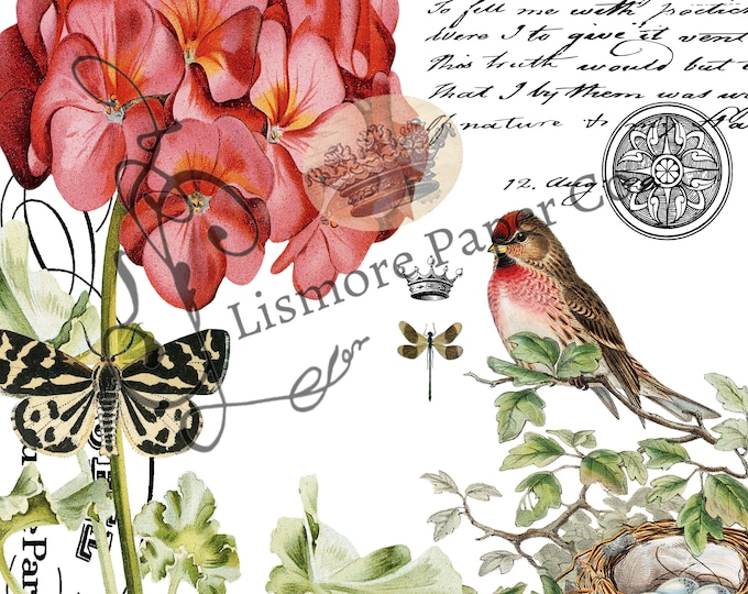 Vintage Bird Botanical Architecture and Script Collage Instant Download Feed Sack PNG JPEG Transfer Image, Printable Art