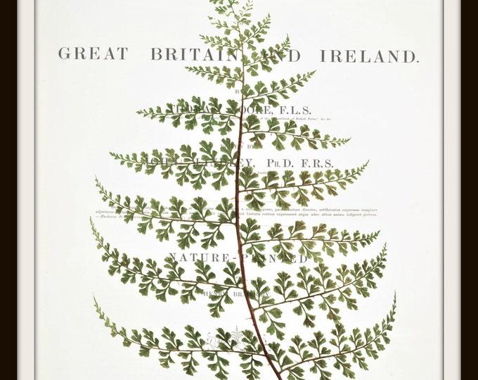 Fern Illustration, Botanical, Plant, Antique Book Art, Printable Art, Botanical Wall Decor, Instant Download,Digital Download, Graphic