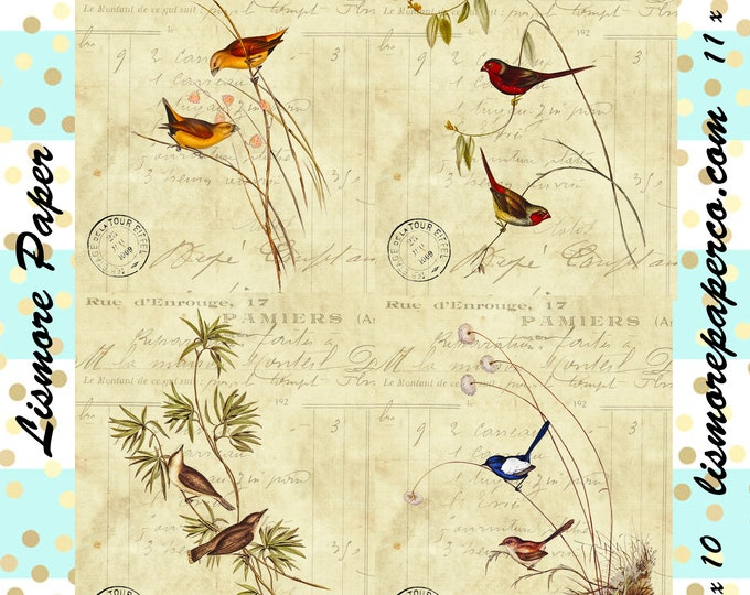Set of Four, Printable Art, Instant Download, Bird Paper, Paper Crafts, Scrapbook, Altered Art, Vintage, Ephemera, Digital Paper