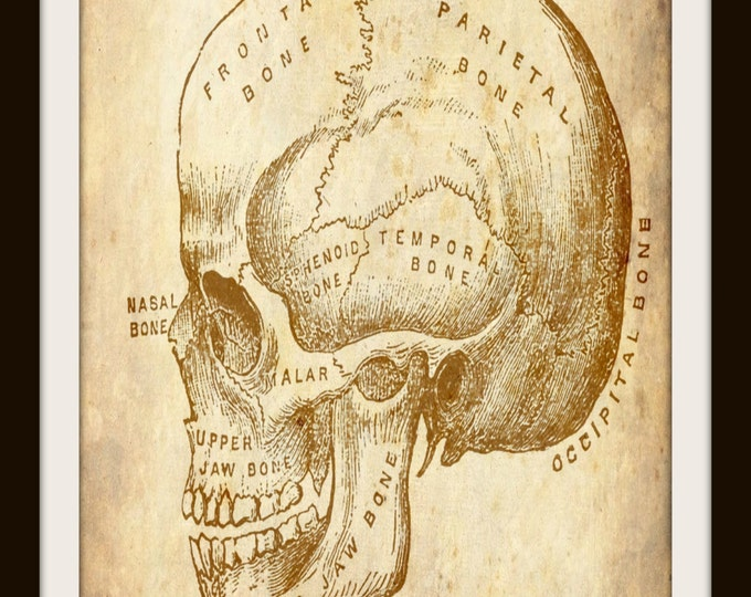 Vintage Human Skull, Art, Anatomy, Instant Download, Halloween Decor, Medical, Printable Wall Art, JPEG