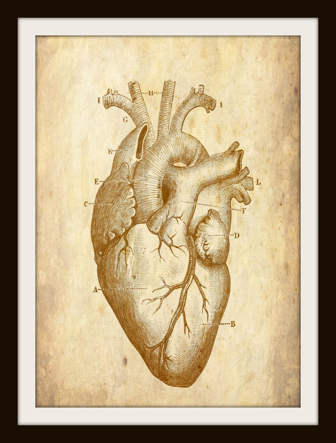 Vintage Human Heart, Art, Anatomy, Instant Download, Halloween Decor ...