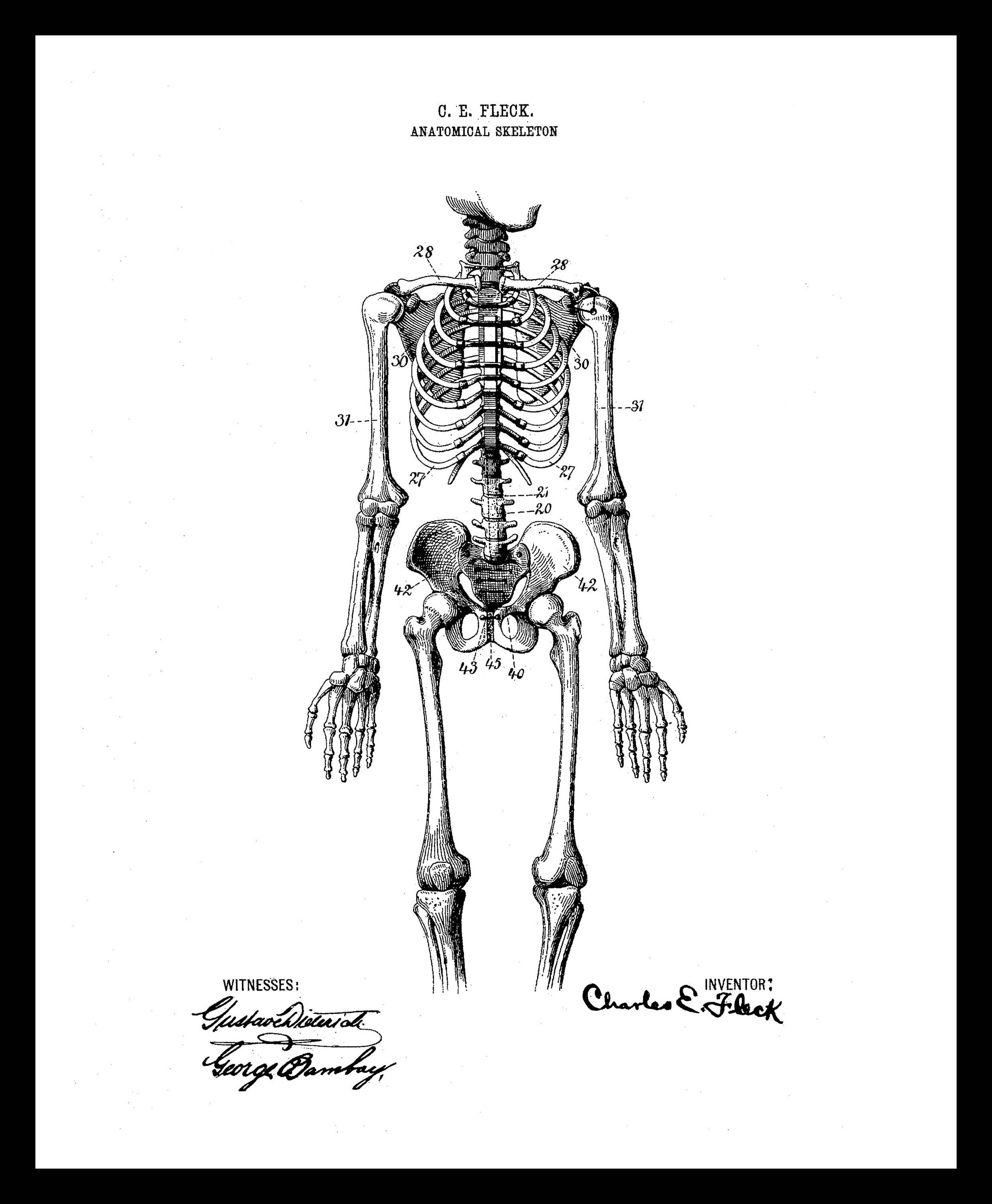 Instant Download Human Anatomy Skeleton Vintage Illustration