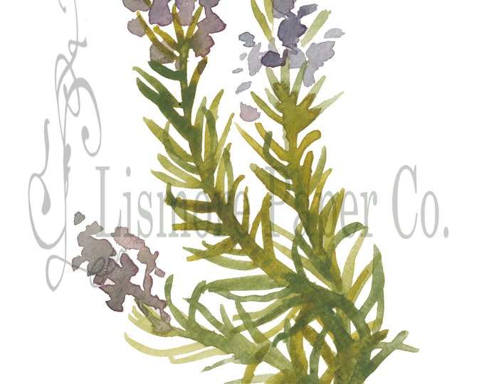 Instant Download Botanical, Rosemary Herb, Printable Art, Instant Wall Art, Graphic Kitchen Art, Craft, Digital Download, Botanical Wall Art